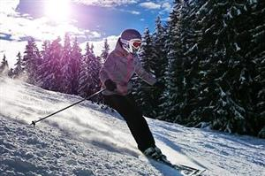 Downhill Skier amid Pines